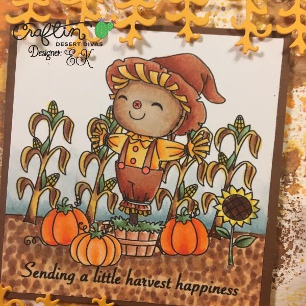 EK Gorman CDD 9:5 Harvest 2